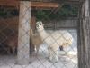 zoo_lj5_razred_2020_21_012