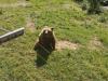 zoo_lj5_razred_2020_21_017